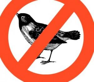 Sore Head and Bird Poop